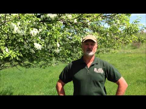 Q&A with Mark Shepard: How does restoration agriculture benefit pollinators?