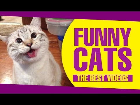 ▷ FUNNY CATS videos 😻😂 Hold Your Laugh If You Can