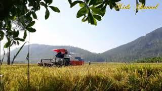 Bé xem máy gặt lúa | Nhạc thiếu nhi sôi động
