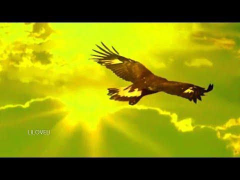 Leo Rojas - El Condor Pasa