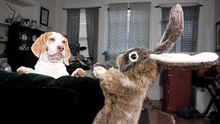 Dog vs. Rabbit Puppet: Cute Dog Maymo