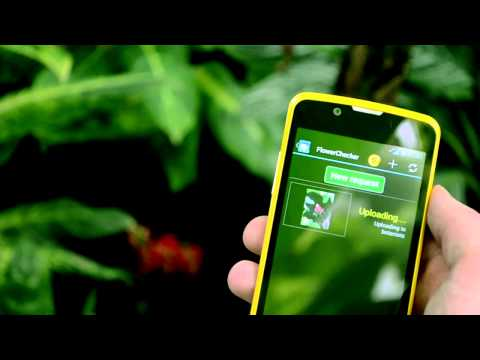 FlowerChecker+, plant identify APK Cover