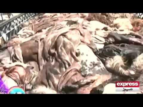 Leather Snatchers got arrested in Karachi