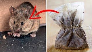 Pozbądź Się Myszy I Pająków Naturalnie - Fajny Trik