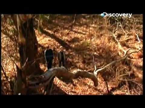 Assombrações - Floresta Negra (Dark Forest)