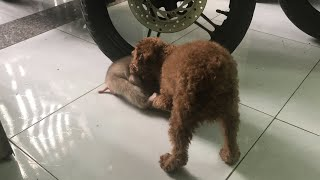 BABY MONKEY & DOG - FUNNY MOMENTS OF BABY SHIN AND CHI