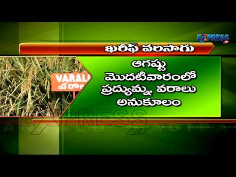 Rice cultivation tips in Kharif season - ExpressTV