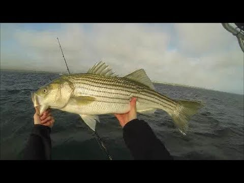 Insane Striper Fishing! -- Live Lining Mackerel for Striped Bass -- Cape Cod