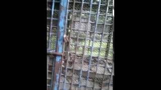 Snake Cage Dhaka Zoo Sept 24, 2016
