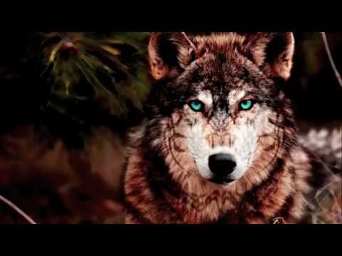 Karunesh--Call Of The Tribes