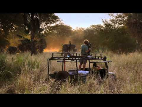 Healing Africa's Elephants Trailer