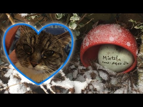 Was ist mit meiner Katze passiert ? | Rundgang durch meinen Garten im Schnee  2.0