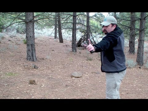 Sling Bow Chief AJ HFX In Field Review