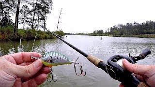 Topwater Fishing in the Rain!