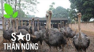 """Tỷ phú xóm núi với nghề nuôi chim """"không biết bay""""   VTC16"""