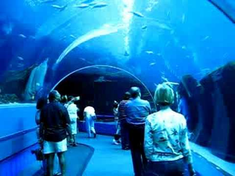 Georgia Aquarium underwater tunnel