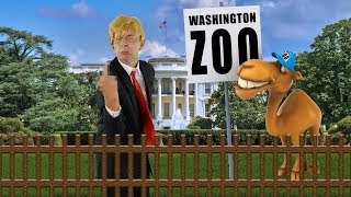 Trump Trump Trumpeltier Trump Song