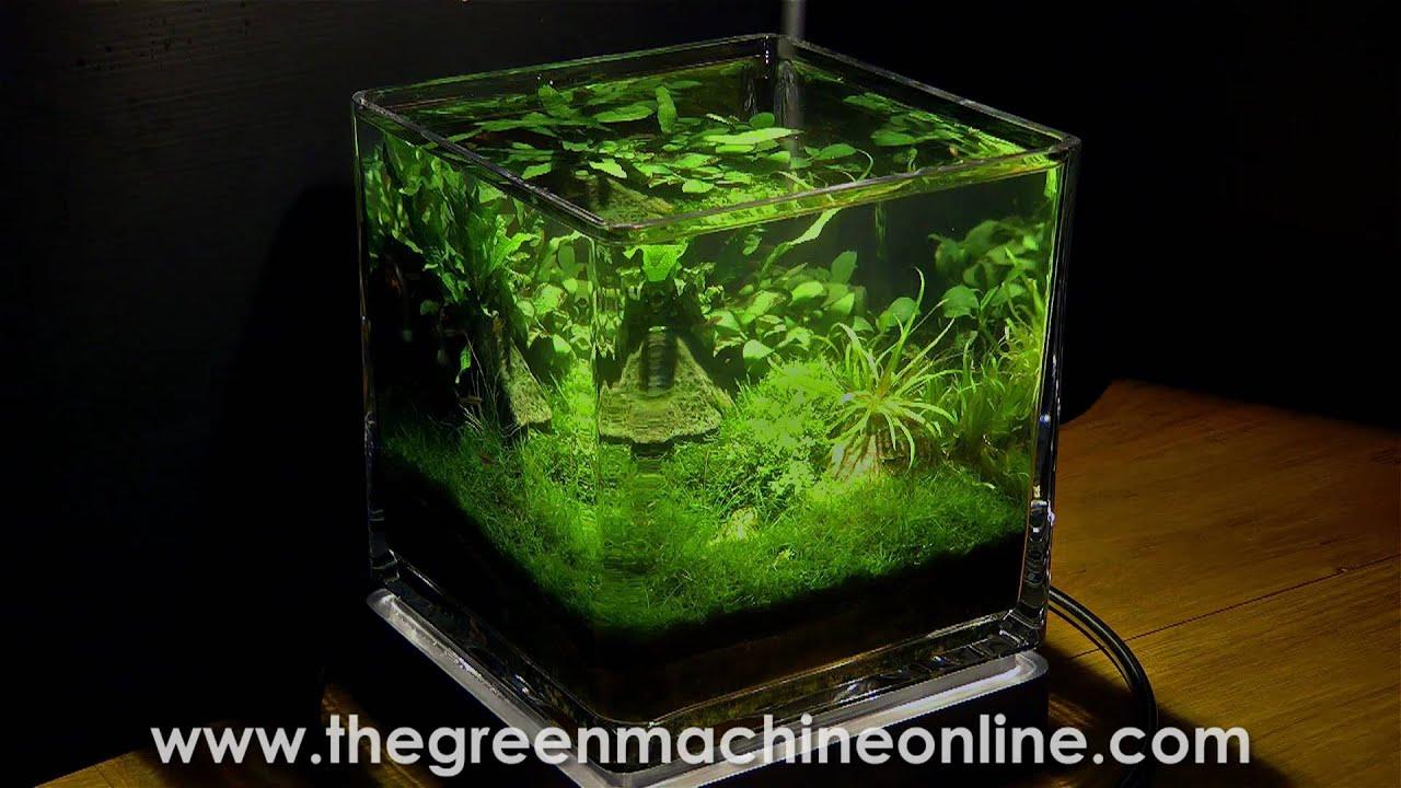 Planted Nano Pico Aquarium Aquascape By The Green Machine Youtube