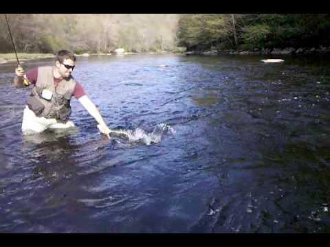 Shetucket river fishing videos for Fishing report ct
