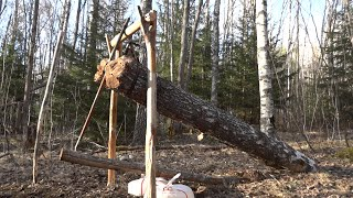 How To Make A MASSIVE Deadfall Trap.