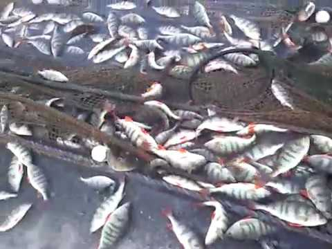 дилогия рыбалки