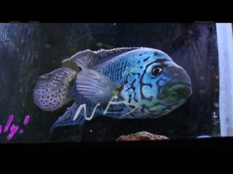 Blue Zoo TV - Episode 2 (Part 2): Fish Hatchery