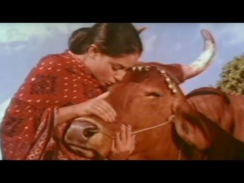 Jaya Bachchan Gaai Aur Gori  - Scene 120