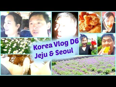 Korea Trip Vlog Day 6 -Jeju Island, Seoul, Picking Strawberry, Maze, Horse Riding, Fried Chicken