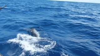 :: Sport Fishing TV :: Marlin Fishiing