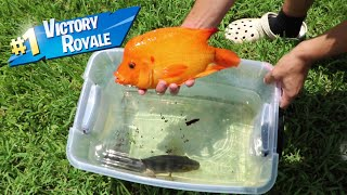 FISH BATTLE ROYALE In Plastic tub