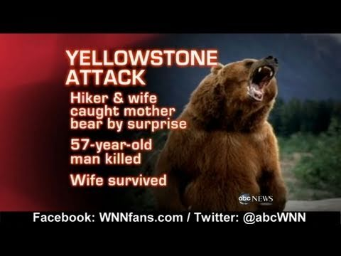 Grizzly Bear Attack in Yellowstone National Park