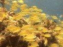 Isla Bonita Paseo en Bote