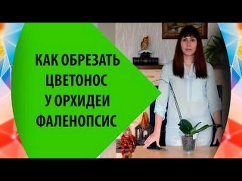 Как Обрезать Цветонос Орхидеи Фаленопсис