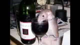 Watch Bajaga Vesela Pesma video