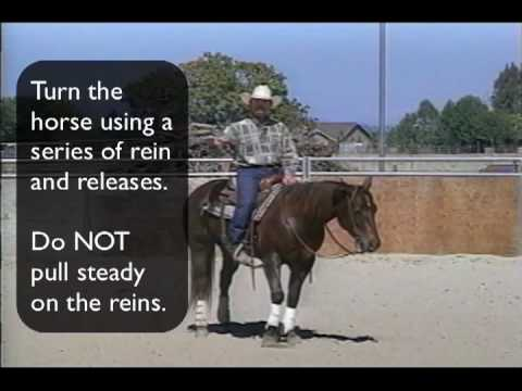 Reining Training Your Horse to Spin pt.1
