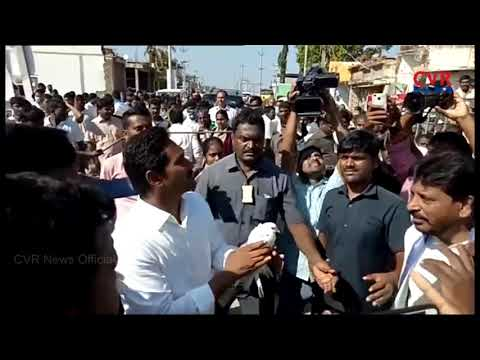 YS Jagan Mohan Reddy Birthday Celebrations with Fans |Srikakulam Padayatra |Andhra Pradesh |CVR NEWS