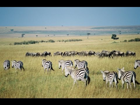 Kenya: 10 Top Tourist Attractions - Video Travel Guide