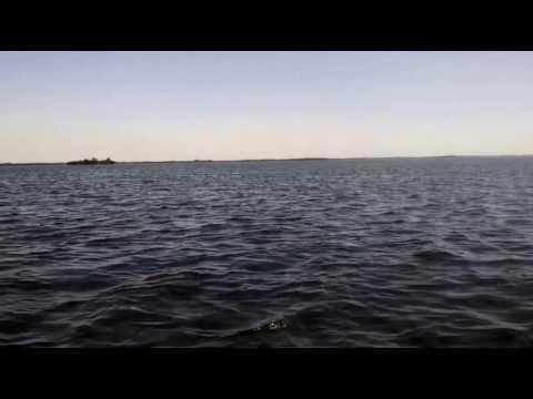 Dolphin in Pine Island Sound, FL (3-14-14)