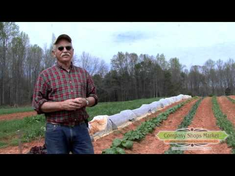 Red Bud Farm - Producer Profile - Company Shops Market