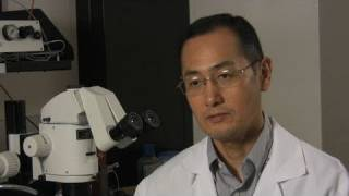 Interview with Nobel winner Shinya Yamanaka