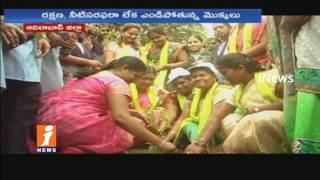 Govt Officials Neglects On Haritha Haram Program In Adilabad | iNews