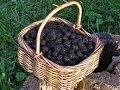 Back To Eden Gardening~Mulching Blackberries