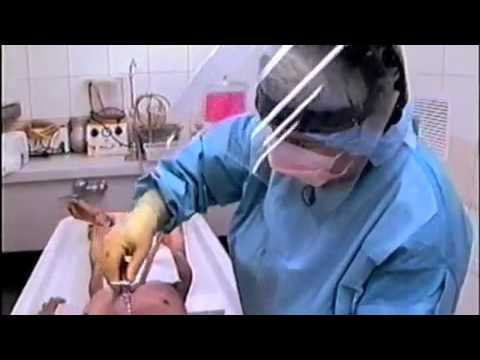 The Embalming Process.mp4 video