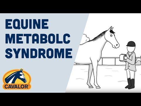 Cavalor - Equine Metabolic Syndrome (EMS)