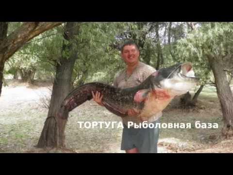 рыбалка на дунае вилково видео