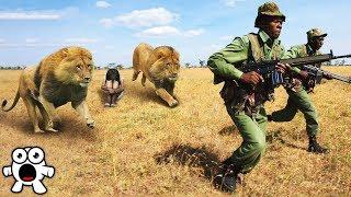 Wild Animals That Saved Human Lives