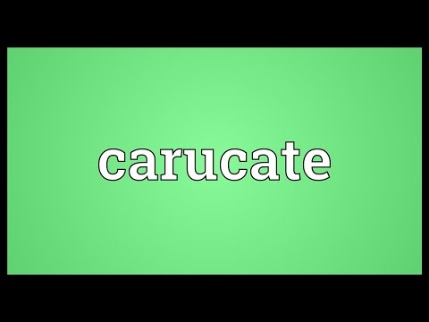 Header of carucate