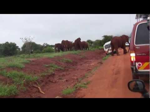 Elephant Attack Kenya