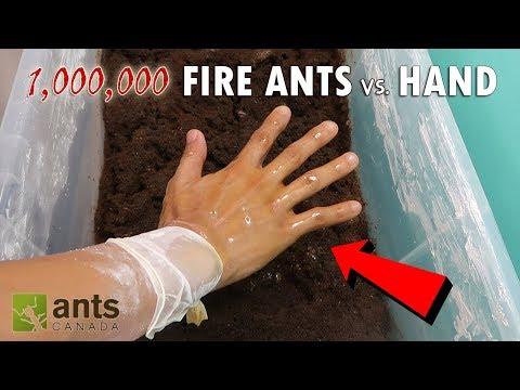 FIRE ANTS VS MY HAND.mp3