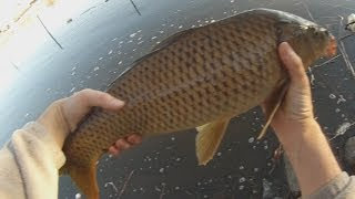 Winter Carp on The Fly Fix 2